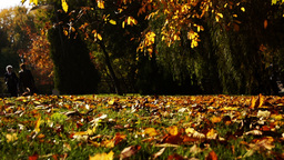 Autumn leaves falling in autumnal park Footage