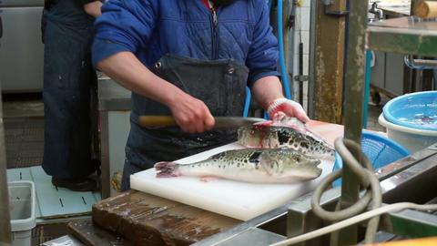 fugu, pufferfish, porcupine fish sashimi chef preparation Footage