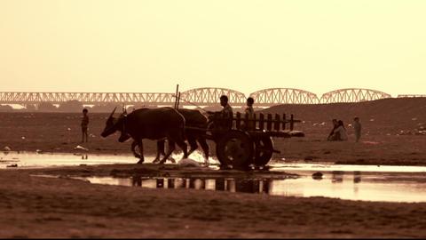Burmese Rural Man Driving Wooden Cart Crossing The Irrawaddy River. Myanmar stock footage