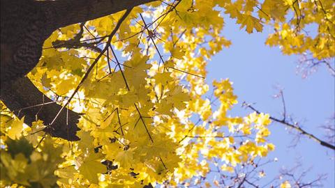 Leaves on tree Footage