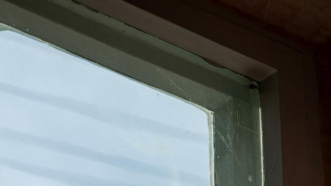 Moth in the web on the window Footage
