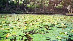 Pond With Water Lillies At Trou D 'eau Douce stock footage