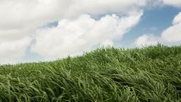 Sugar cane fields in windy mauritius Footage