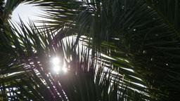 sun shining through palm leafs Footage