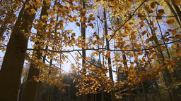 Autumn Forest Sunshine stock footage
