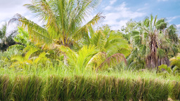 tropical nature background palm trees Footage