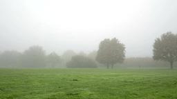 walking in foggy park far away converted Footage