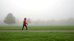 walking through foggy park close converted Footage