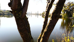 Lake landscape through a tree trunk Footage