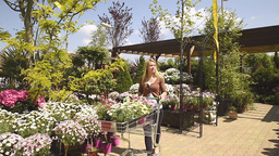 Woman Shopping In Garden Centre stock footage