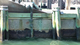 New York City 389 Lower Manhattan Pier A south ferry memorial of drowning man Footage