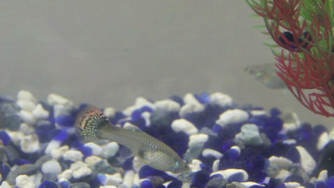 Tropical Fish At Bottom Of Tank stock footage