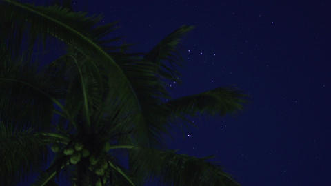 Ngwe Saung, Time lapse sky with stars and palmtree Footage