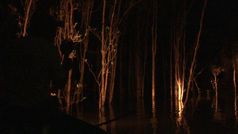 Brazil: searching for frogs in night 1 Stock Video Footage