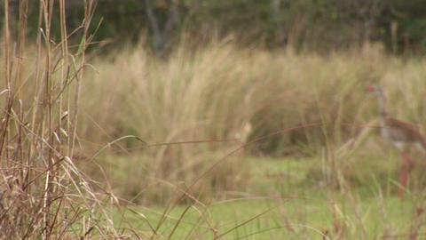 Brazil: Amazon river region birds 10 Stock Video Footage