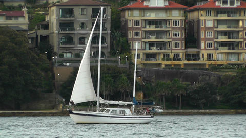 North Sydney view 07 sailboat Footage