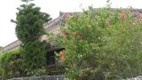 Taketomi Island Okinawa Japan 02 Footage