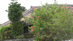 Taketomi Island Okinawa Japan 02 Stock Video Footage
