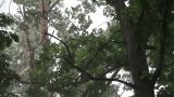In A Thunderstorm Under A Tree stock footage