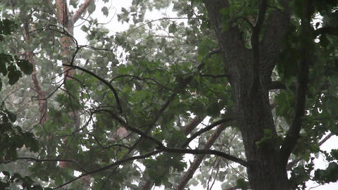 In a thunderstorm under a tree Stock Video Footage