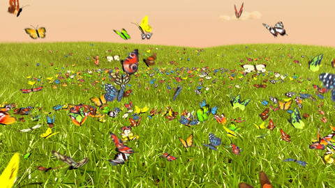 Spring Butterfly Stock Video Footage