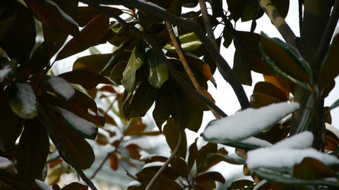 Snow covered leaves Stock Video Footage