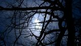 Branches covered sky and cloud.Trunk,forest,woods,Desolate Stock Video Footage