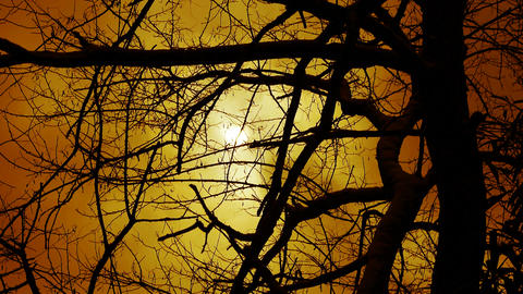 Branches covered sky and cloud.Trunk,forest,woods,Desolate,dusk,sunset,sunrise Footage