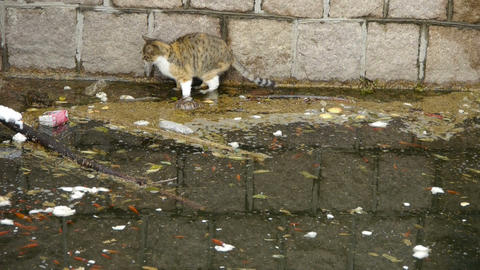 Cat playing in pool side,dead fish in pollution water Stock Video Footage