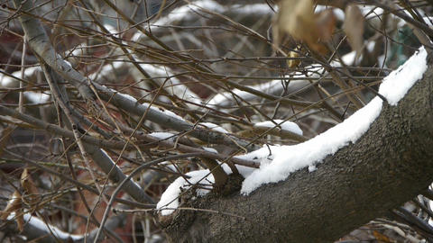 Snow cover trees branches Stock Video Footage