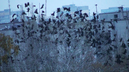 Flock Of Birds On The Tree Flying Away Footage