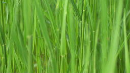 Green Grass Background Video stock footage