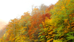 Autumnal mountain landscape, copper-colored trees Footage