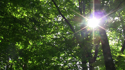 Sun seen through green leaves of trees 051 Footage