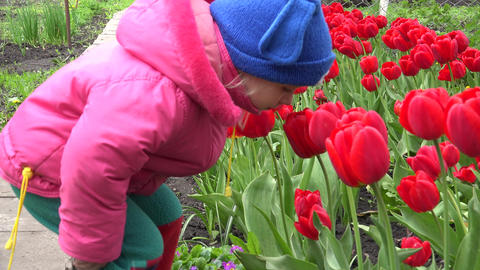 Cute Little Girl Smelling Red Tulipes. 4K UltraHD, UHD Footage