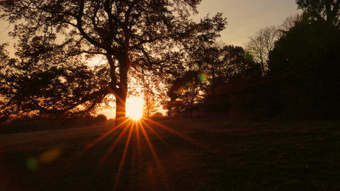 Sunset behind a Large Oak Footage