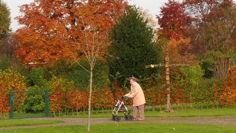 pensioner wheel walker in colorful autumn park 4k 11750 Footage