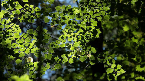 Beautiful spring leaves of tree and rays of light Footage