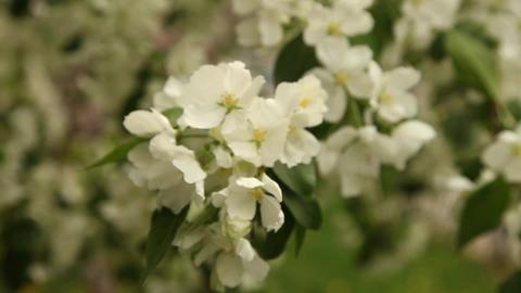 flowers 8 Footage
