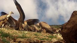 Vultures 0