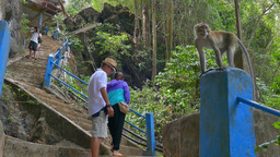 Monkey At Tiger Cave Temple stock footage