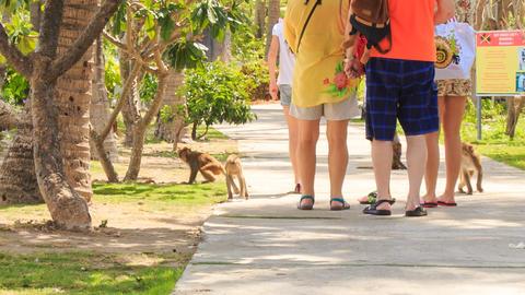 tourists walk in park monkeys run around ask for food in Vietnam Footage