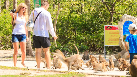 tourists take pictures feed herd of monkeys in tropical park Footage