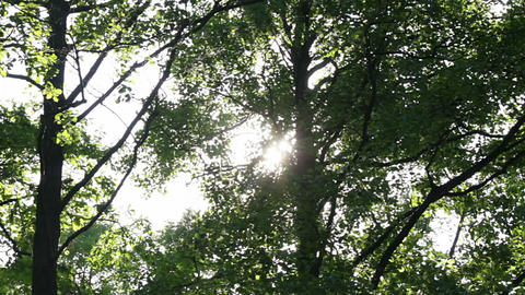 Sun behind the foliage Stock Video Footage