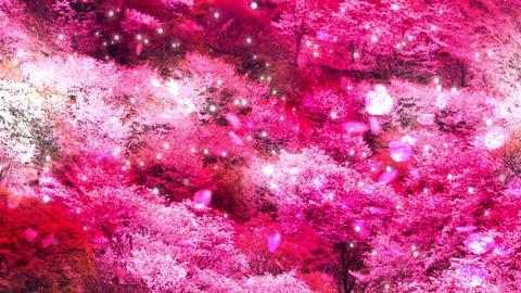 Sakura26345 Stock Video Footage