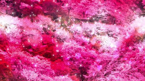 Sakura26345 Animation