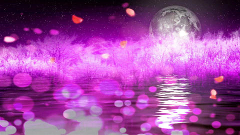 cherry blossoms Moon3878 Stock Video Footage