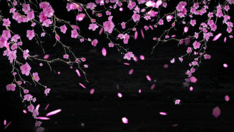 cherry blossoms 31316 Animation