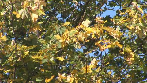 autumn 9 Stock Video Footage