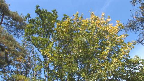 autumn 11 Footage